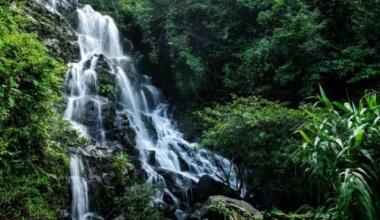 The Botanic Garden Eco-Tourism